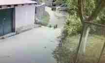 Αρκουδάκια στο Μέτσοβο : «Στην υγεία μας ρε παιδιά» !