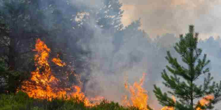 Δασικές πυρκαγιές στη Μεσόγειο: αιτίες, επιπτώσεις, αναγέννηση δασών