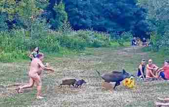 Γερμανία: Περίεργη σκηνή σε λίμνη: γυμνός άνδρας κυνηγά αγριογούρουνο