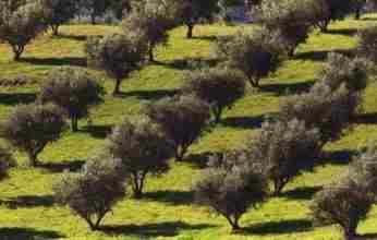Ο κομβικός ρόλος του «GEN4OLIVE» στις προοπτικές επένδυσης στον ελαιοκομικό τομέα