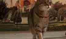 Πέθανε η Γκλι, η γάτα – μασκότ της Αγίας Σοφίας