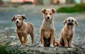 Οι σκύλοι είναι σε θέση να βοηθήσουν στον έλεγχο της πανδημίας ;