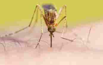 Μεγάλες οι ευθύνες της Περιφέρειας Πελοποννήσου για την καθυστέρηση της κουνουποκτονίας
