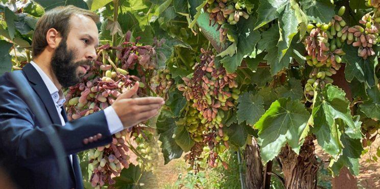 Επίκαιρη ερώτηση του Γ. Ψυχογιού για στήριξη του εισοδήματος των παραγωγών της Κορινθίας